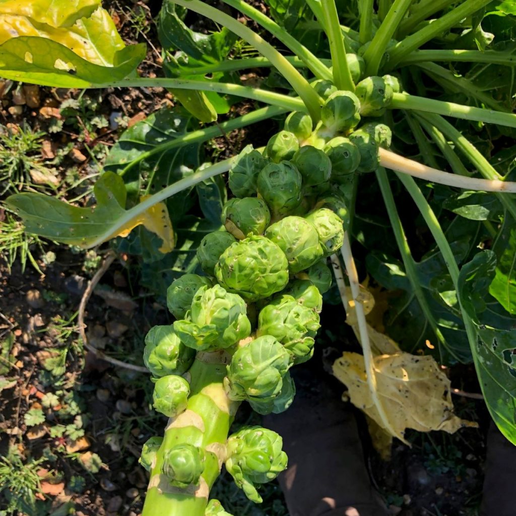Allotment column: celebrating sprouts and planning ahead.
