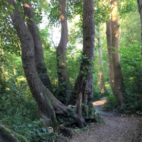 Suburban Safari: Golden Jubilee Butterfly Walk to Weston Shore