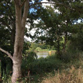 Suburban Safari: Lakeside Country Park