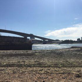 Suburban Safari: A Tale of Three Bridges