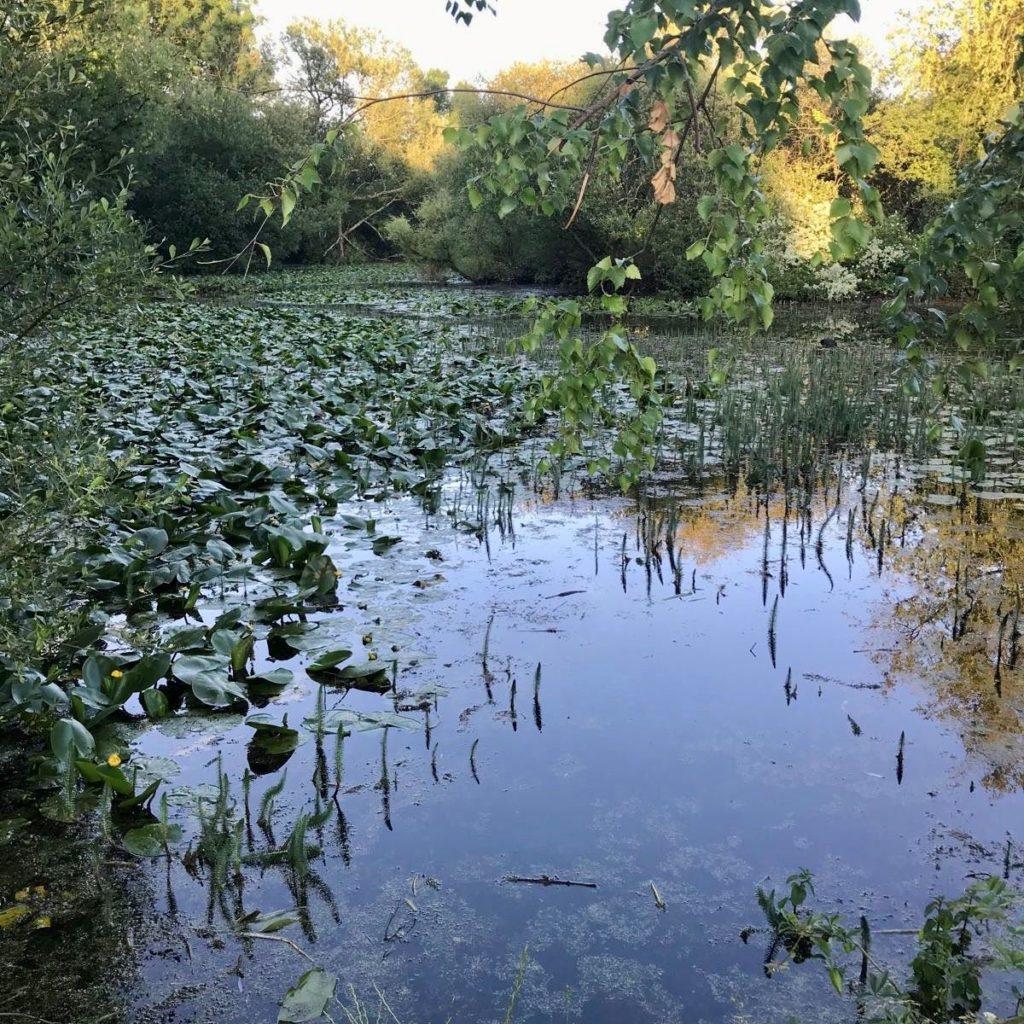 Suburban Safari: Mansbridge Reservoir