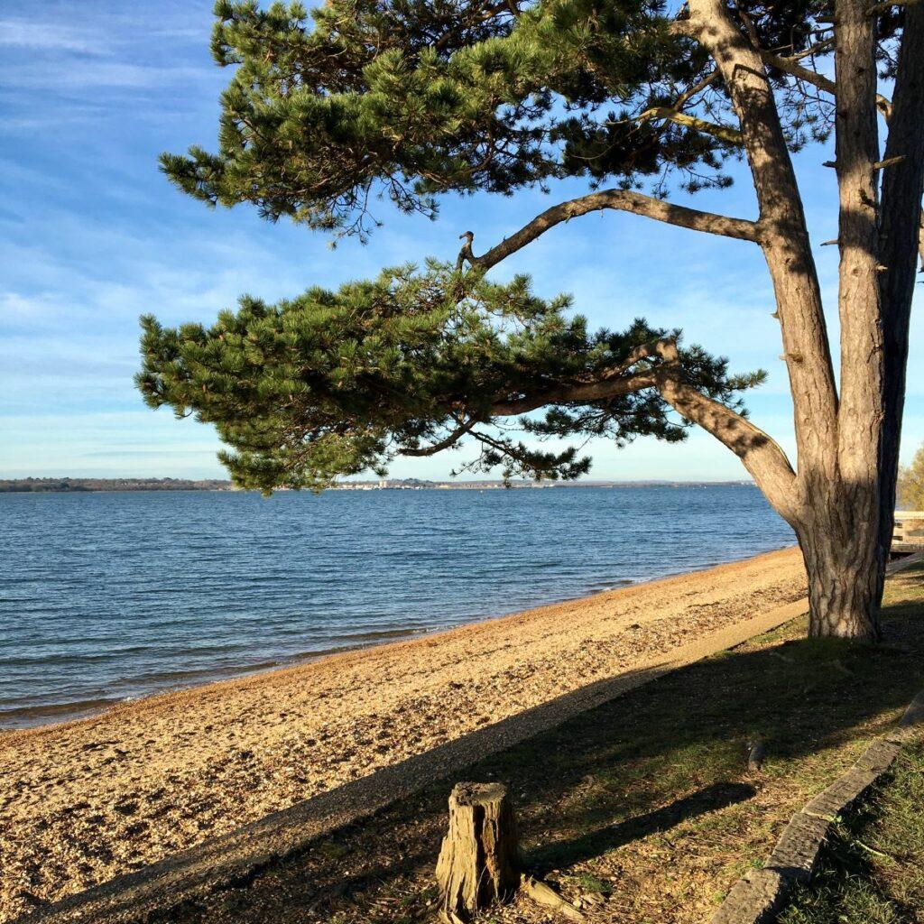 Suburban Safari: Weston Shore