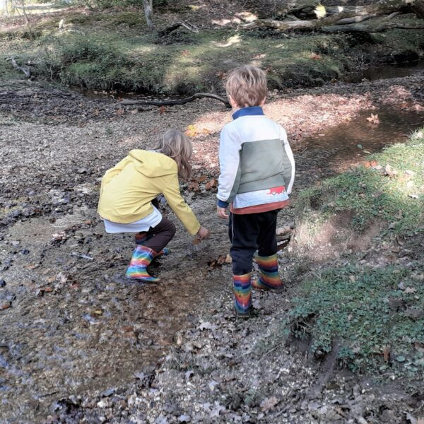 New Forest children's Christmas trail