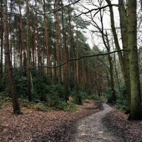 Suburban Safari: The trees of Telegraph Woods