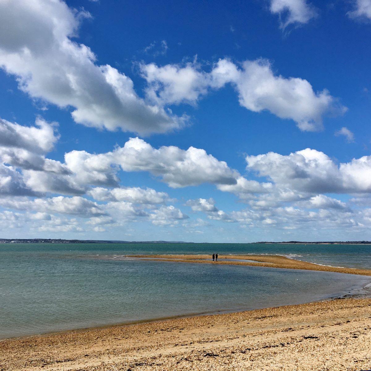 Suburban Safari Part Nineteen – Back to the Beach