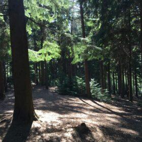 Suburban Safari: Lost in Lords Wood