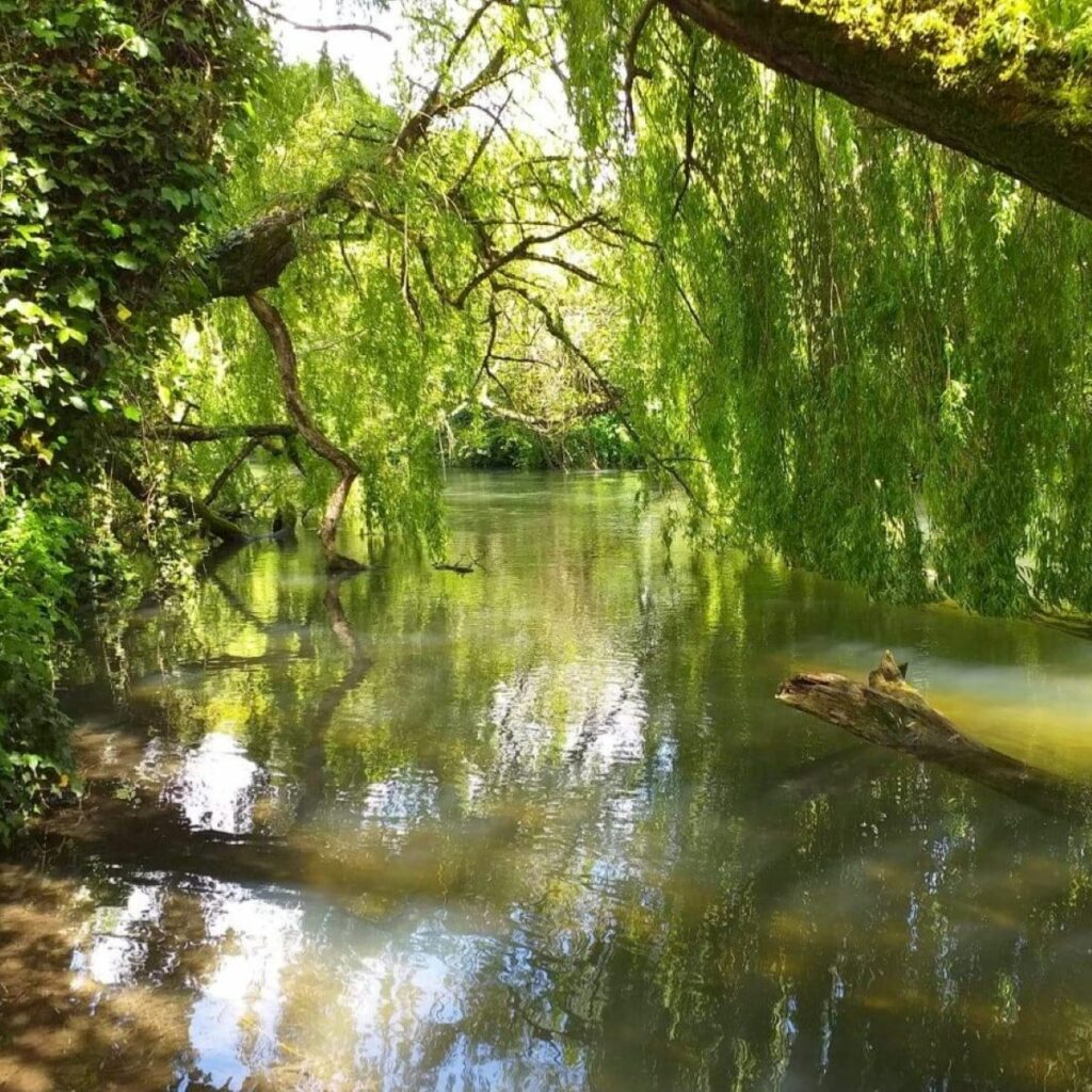 Walk: the Itchen Navigation, Southampton to Shawford