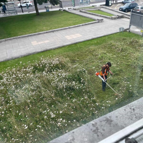 Controversy as Southampton city centre meadows cut