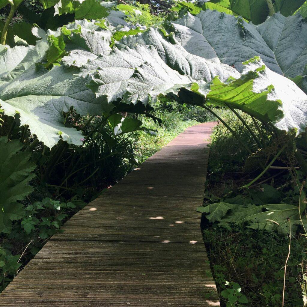 Suburban Safari: The Secret Garden