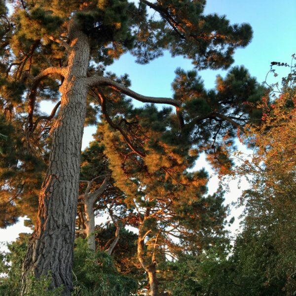 Suburban Safari: Pine Walk